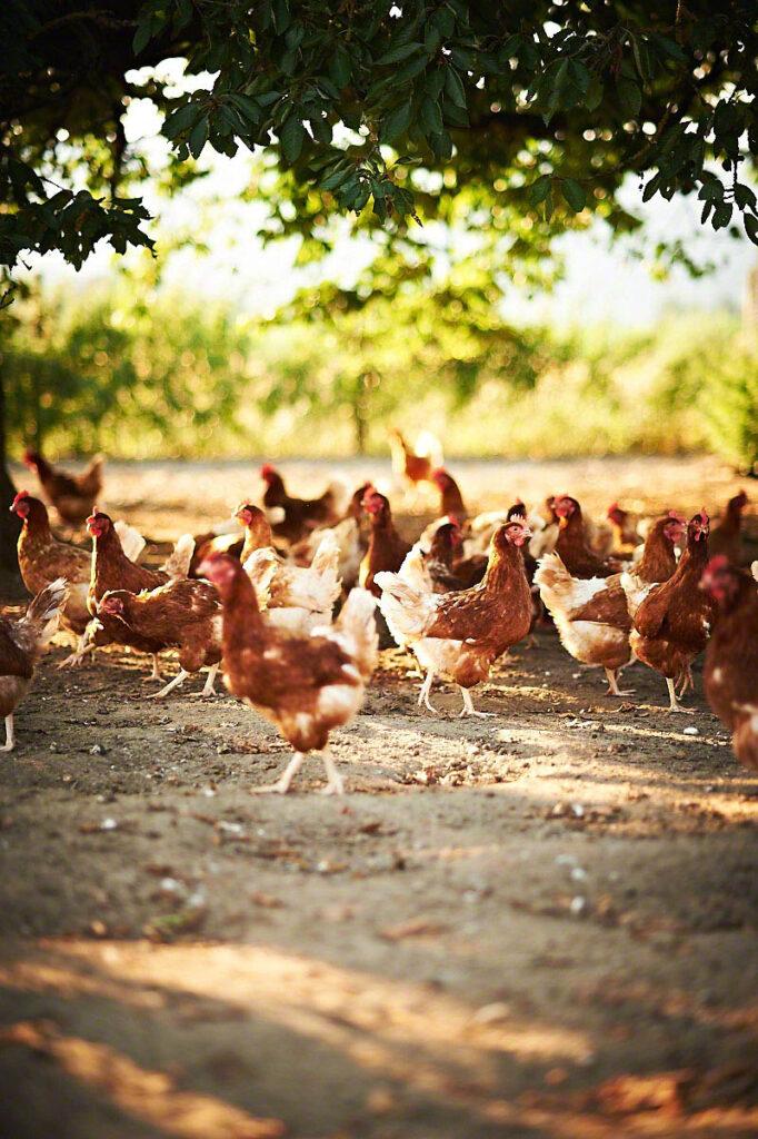 Stimmungsvolle Fotografie für Bauernhof Glabach Neuwied